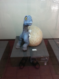 The museum also featured life size models of hatchlings, sadly not for sale.